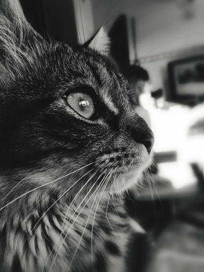 Domestic Cat Domestic Animals Feline Pets EyeEmNewHere EyeEmNewHere