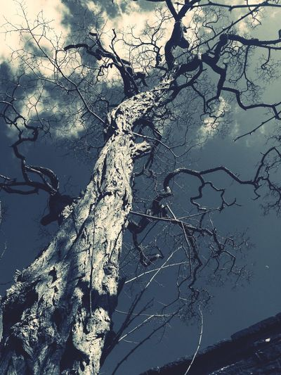 Tree Bare Tree Nature No People Branch Outdoors Day Mountain Beauty In Nature Dead Tree Sky Close-up
