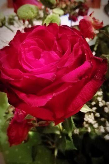 Taking Photos Flowerporn Red Rose Lifeslowlyfadeaway Contrast Colorsplash Rose🌹 Popular Photos Open Edit Bucharest Hello World