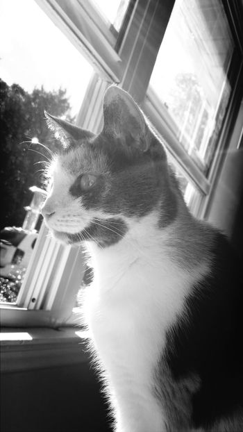 Kitkat Cat Black & White Taking Photos