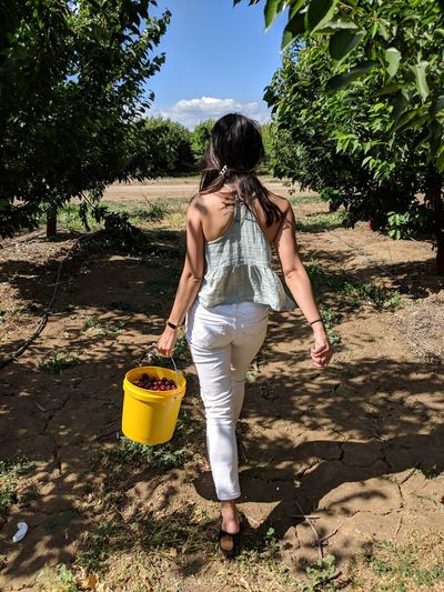 Full length rear view of woman carrying berry fruits while walking at orchard