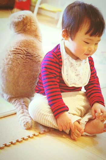 Hello World Friends アラタボーイ とっちゃん Cat Full Length Dog Playing Cute Babyhood