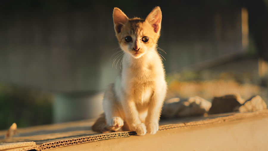 Portrait of kitten sitting outdoors