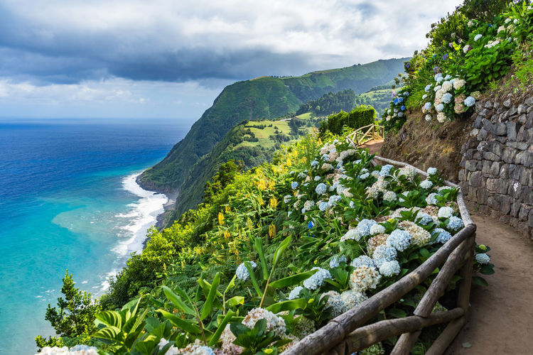 Scenic viewpoint with hydrangeas, Sao Miguel, Azores Azores Hydrangea Portugal Azores, S. Miguel Beach Beauty In Nature Cloud - Sky Day Green Color Growth Horizon Horizon Over Water Land Nature No People Outdoors Plant Scenics - Nature Sea Sky Tranquil Scene Tranquility Tree Water
