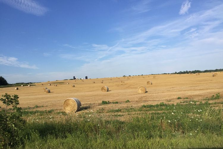 What's On The Roll Farm Life Nature Photography Hay Bales Hay Field Pure Michigan Frsh Cuts >> Fresh Air... Free Spirit Portrait Colour Your Horizn
