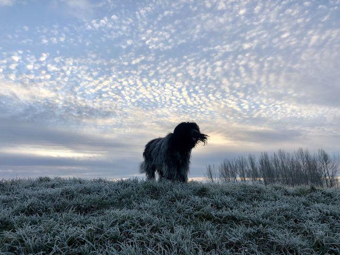 Dog standing on grassy land against sky