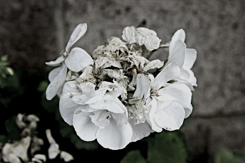Gothic Beauty /// Part Two Nature Photography Black And White Nature Flowers