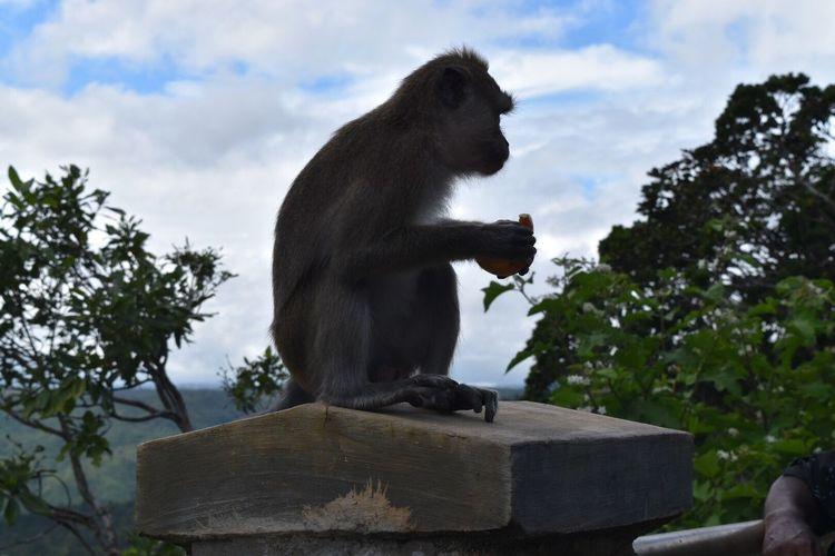 Monkey 🐒 Monkey EyeEmNewHere Nikon D5500 Travel Photography Mauritius Island  The Great Outdoors - 2017 EyeEm Awards