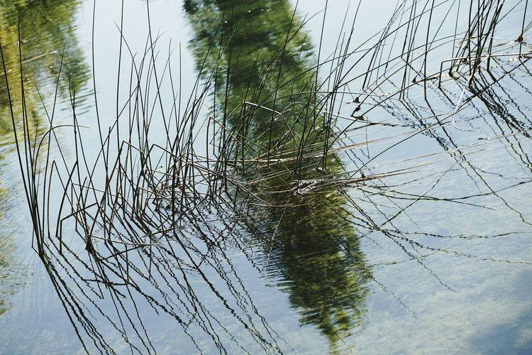 Reflection Water Lake No People Outdoors Krka National Park Croatia Plants Bildfolge Photography Nature Photography Bizarreplants