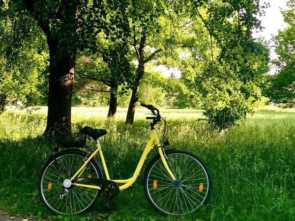 Nothingtodo Sunlight Freedom Spring Yellow Bycicle Nature Park Grass Growth Sunlight Day Outdoors Land