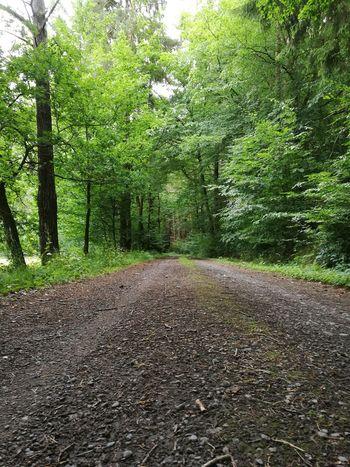 Tree Road Green Color