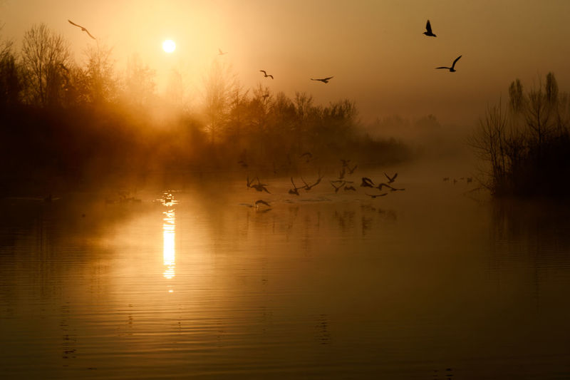 Animal Themes Animal Wildlife Animals In The Wild Beauty In Nature Bird Day Flock Of Birds Flying Lake Large Group Of Animals Mid-air Migrating Nature No People Outdoors Reflection Scenics Silhouette Sky Spread Wings Sunset Tranquil Scene Tranquility Tree Water Shades Of Winter