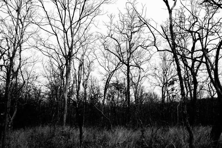 Silhouette bare trees on field against sky