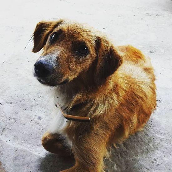 Woof? Dogsofinstagram Dog Cute Portrait Looking Serbia HoundDog Instagramsrbija