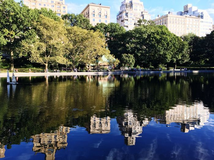 Reflection Water Tree Tranquil Scene Lake Tranquility Central Park New York City Architecture Building Exterior Calm Scenics Standing Water Nature Green Outdoors Beauty In Nature No People Park Water Surface