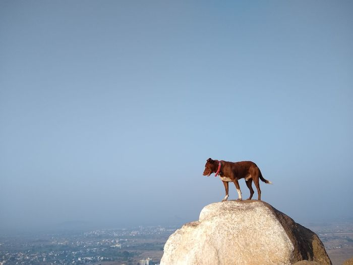 Horse standing on rock against clear sky