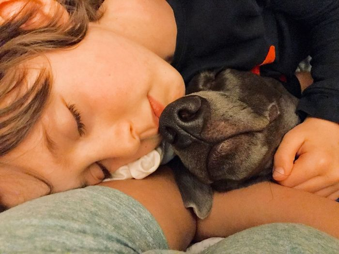 Cute Sweet Eyes Closed  Man's Best Friend Cuddle Weimaraner Boy Pets Dog Domestic Animals One Animal Animal Themes Eyes Closed  Real People Bonding Leisure Activity Indoors  Embracing Sleeping Friendship Love Puppy