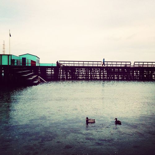 Winter on the northen sea - Copenhagen The Explorer - 2014 EyeEm Awards Eye4nature Urban Escape