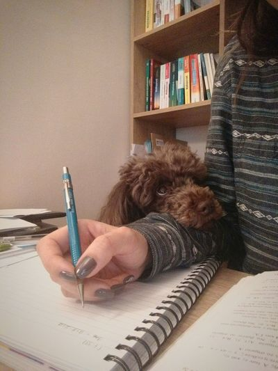 My Dog My Friend My Companion☺ While Working Writing Devotion Looking Right At Me Poodle🐩 Women Around The World