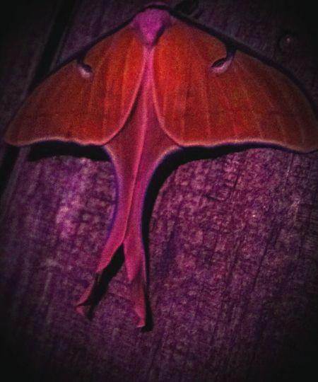 Like A Moth To A Flame