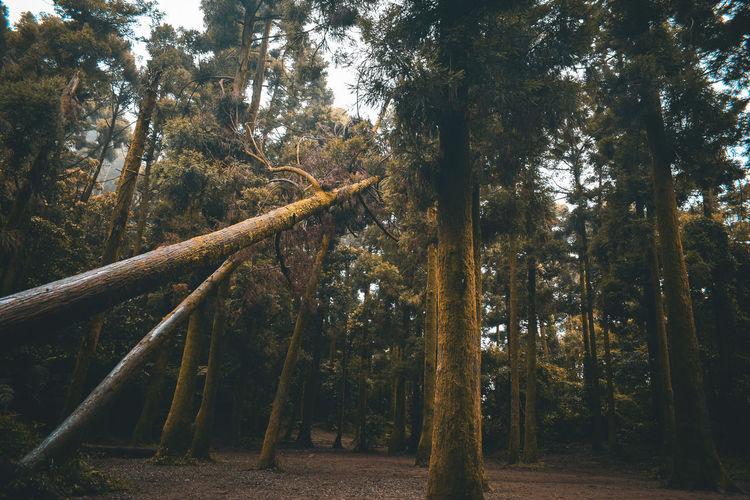 A hidden forest