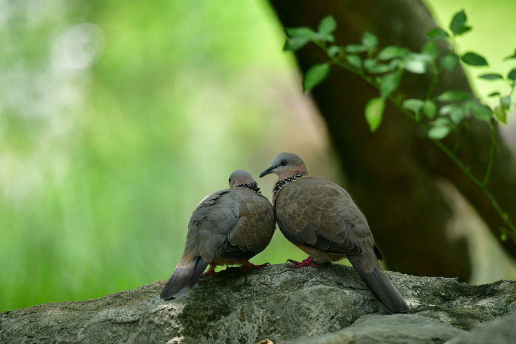 a sweet couple The Creative - 2019 EyeEm Awards The Great Outdoors - 2019 EyeEm Awards Beauty In Nature Purist No Edit No Filter Bird Tree Perching Full Length Mourning Dove Close-up