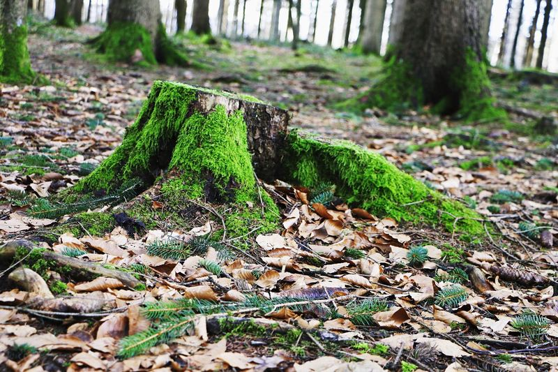 Day No People Nature Leaf Green Color Outdoors Field Forest Tree Trunk Beauty In Nature Tree Close-up
