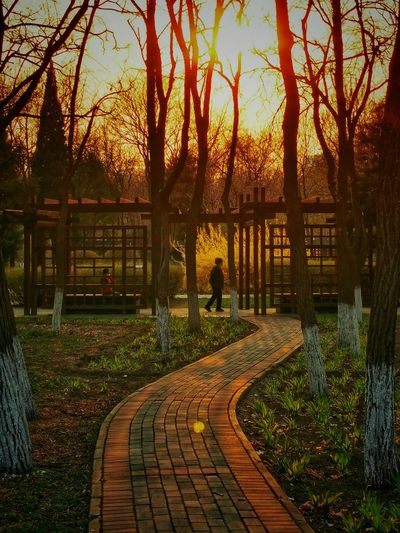 View of footpath in park during sunset