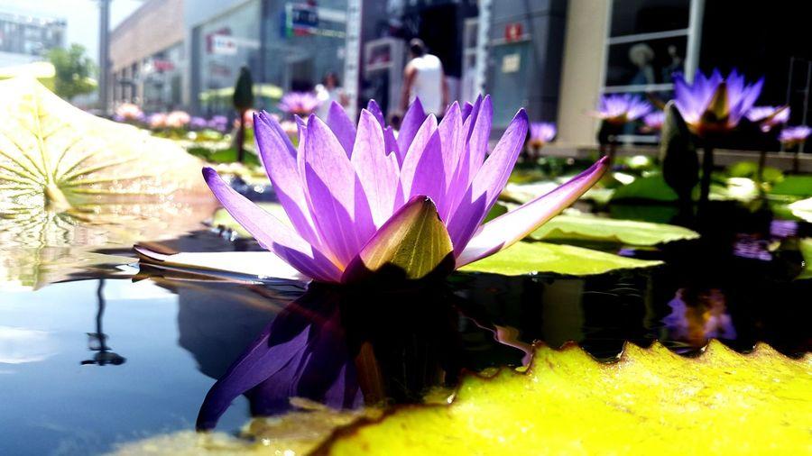 Water Beautiful Nice EyeEm Relaxing Sweet Flower Enjoying Life Hello World Flowers