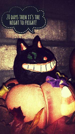 Halloween Ilovehalloween Decoration Text No People Pumpkins BLackCat