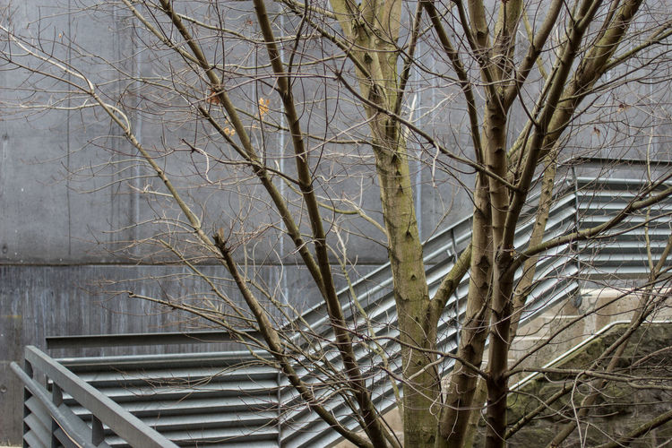 Architecture Railing Rails Steps Tree Trees University Campus Bare Tree Beauty In Nature Branch Building Building Exterior Buildings College Day Grey Nature No People Outdoors Steps And Staircases Tree University