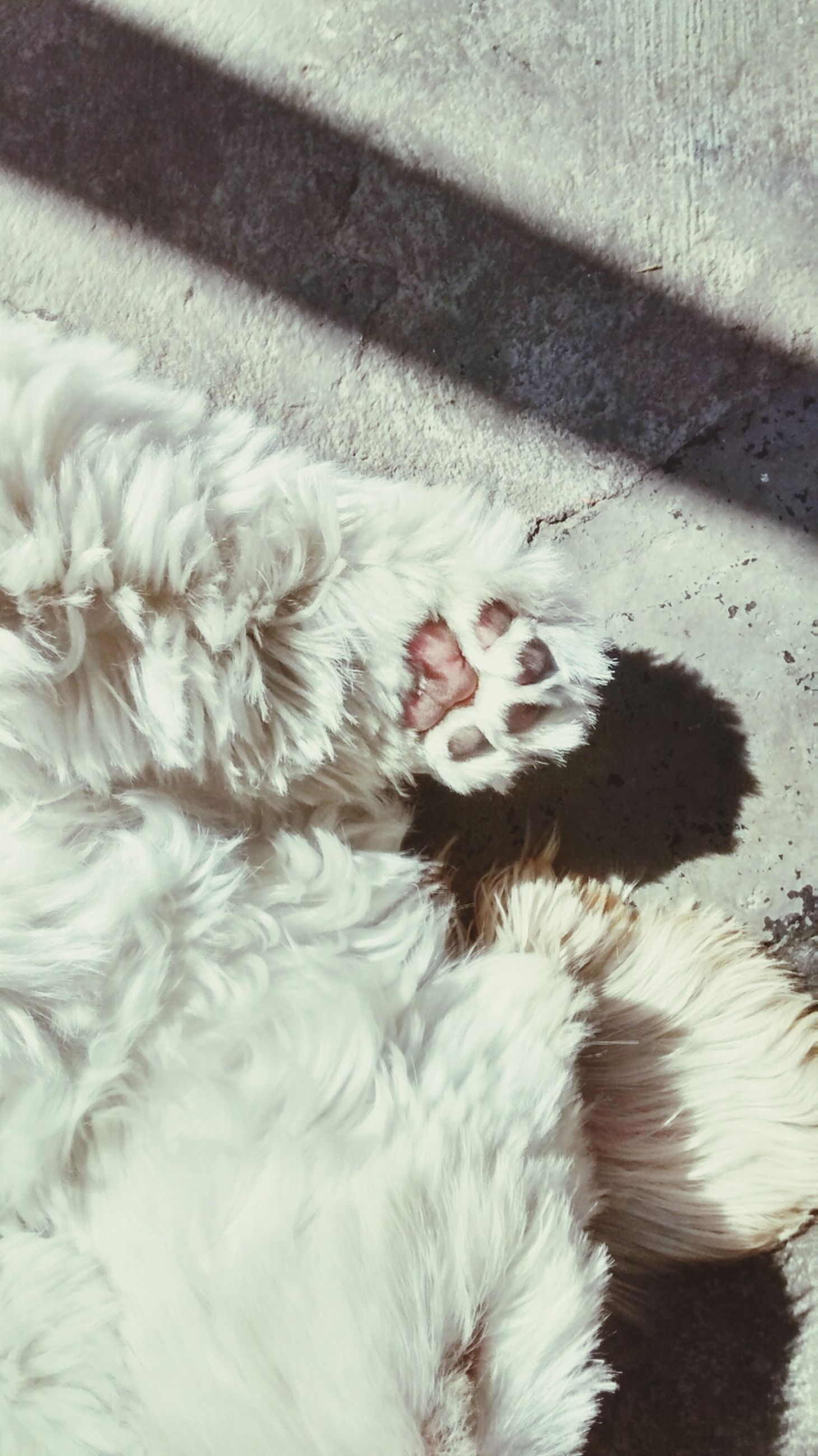 animal themes, domestic animals, pets, mammal, one animal, high angle view, domestic cat, sleeping, cat, dog, relaxation, lying down, resting, feline, white color, no people, eyes closed, animal hair, day, cute