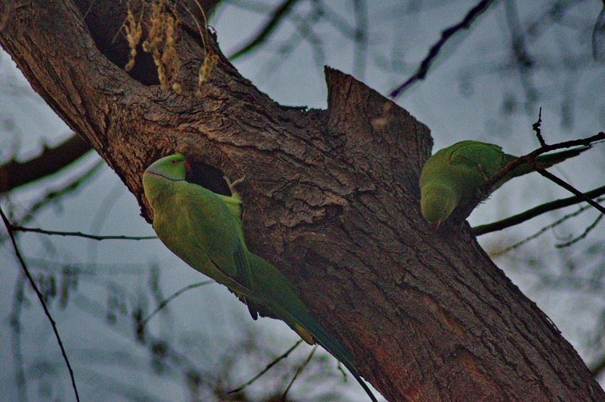 Animal Themes Animals In The Wild Bare Tree Beauty In Nature Bird Branch Close-up Day Domestic Animals Focus On Foreground Greece Green Color Green Parrot Growth Leaf Low Angle View Nature No People Outdoors Park Perching Sky Tree Tree Trunk Tropical Climate