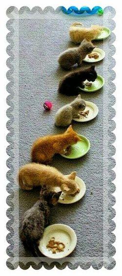 Kittens Who Eat In A RRW Gattini Che Mangiano In fila