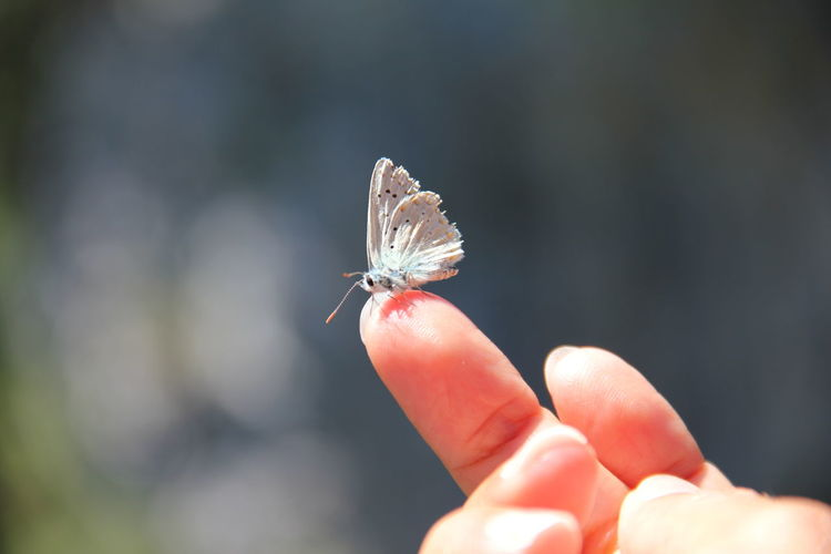 Close-up of butterfly perching on human finger