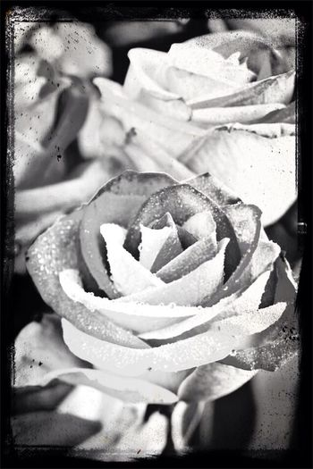 Flowers Blackandwhite Enhaced Frame First Eyeem Photo