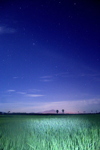 Scenic view of agricultural field against star field