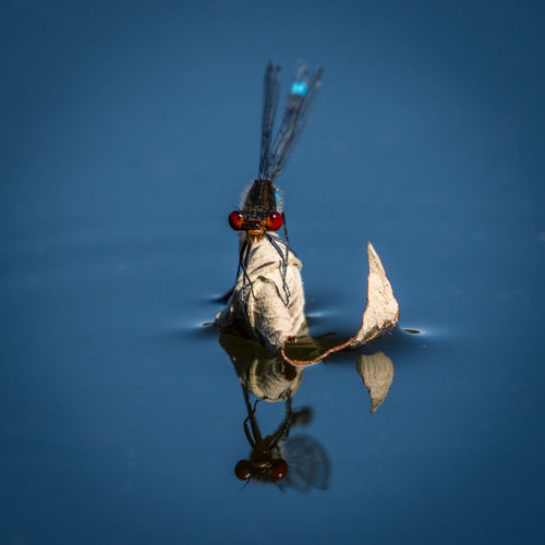 Insect on a lake