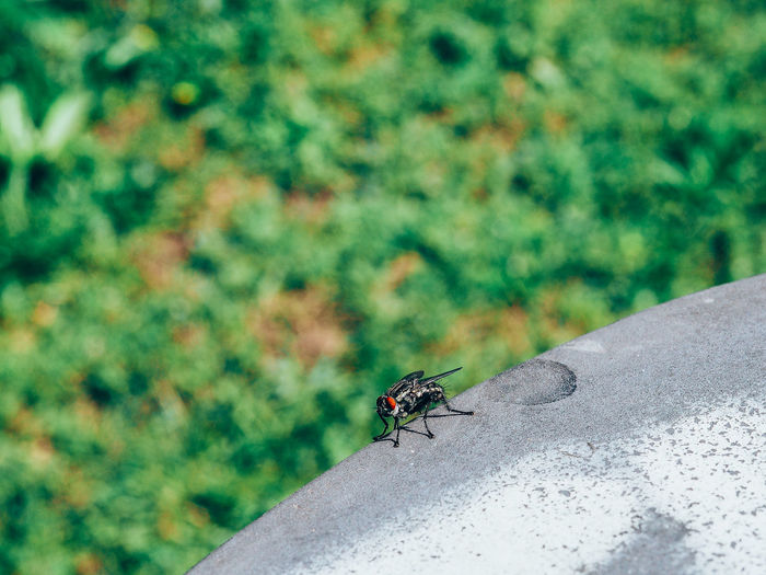 Close-Up Of Housefly On Sunny Day