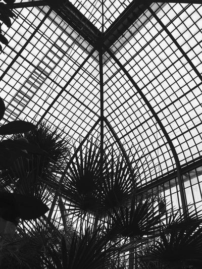 Architecture Indoors  Built Structure Pattern Greenhouse No People Day Sky Leaf Low Angle View Plant Nature Botanical Garden