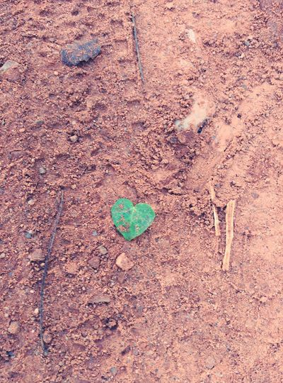Cors Nature Photography Mountain View Mountain_collection Nature_collection Leaves Heart ❤ Heart Leaves Beauty In Nature