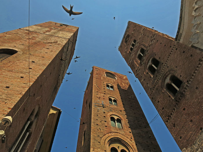 Flights Old Town Towers And Sky Architecture Bird Flight Blue Building Building Exterior Built Structure Clear Sky Day Flying History Low Angle View Nature No People Outdoors Sky Swallows Tall - High The Past Tower Towers Twelve O'clock