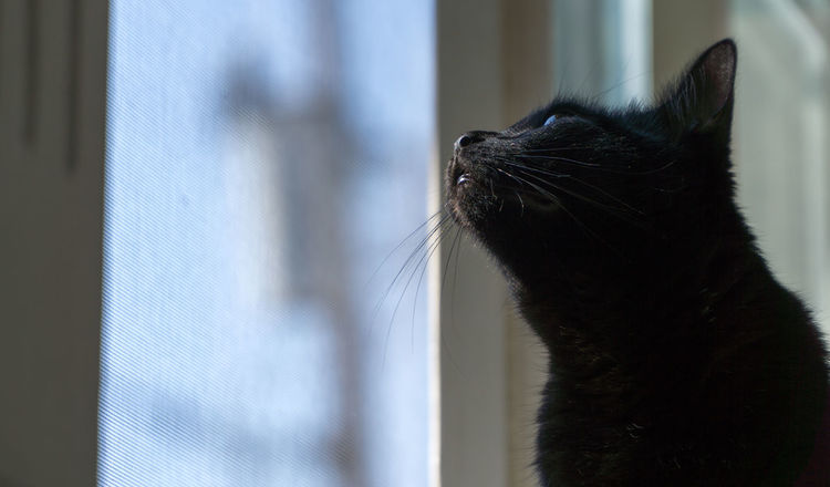 Black Cat Cats Of EyeEm Animal Themes Close-up Day Domestic Animals Domestic Cat Feline Mammal Nature No People One Animal Outdoors Pets Sony A6000 Whisker