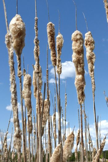 Low angle view of frozen plants on land against sky