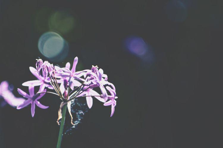 Sumer Flower