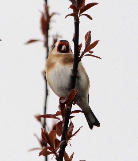 EyeEm Birds Vertebrate Animal Animal Themes Animals In The Wild Animal Wildlife One Animal