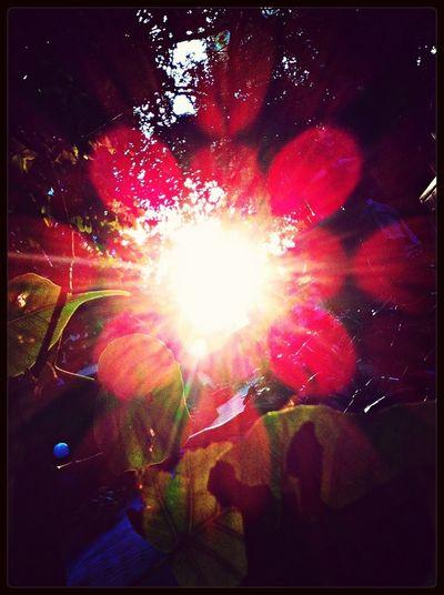 Summer sun through the leaves.