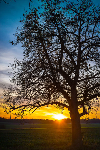 After Glow Beauty In Nature Branch Colorful Sky Day Growth Idyllic Landscape Nature No People Outdoors Scenics Silhouette Silouette & Sky Sky Sunlight Sunset Tranquil Scene Tranquility Tree Tree And Night Sky Trees Yellow Sunset