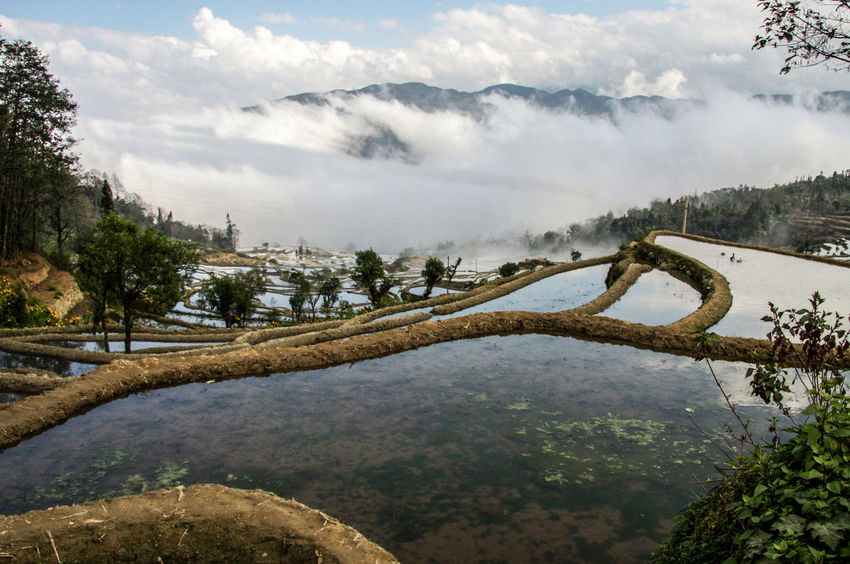 Beauty In Nature Cloud - Sky Day Landscape Nature No People Outdoors Rice Rice Field Rice Fields  Rice Paddy Rice Terraces Ricefield Sky Tree Water World Heritage Yuanyang Yuanyang Terraced Fields Lost In The Landscape