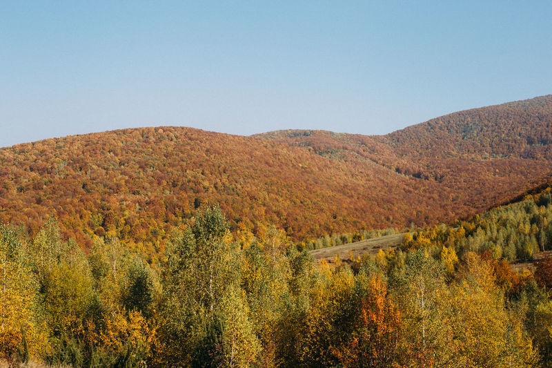 Scenic view of landscape against clear sky during autumn